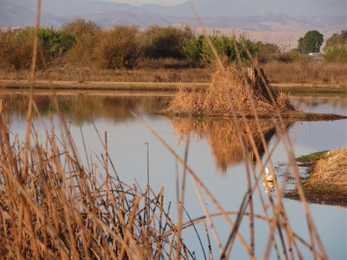 Colusa County Duck Club 18 Acres : Princeton : Colusa County : California