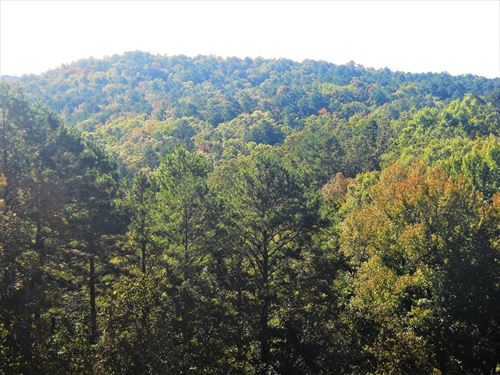 Investors Dream, Resort Acreage : Fairfield Bay : Van Buren County : Arkansas