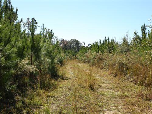 24 Acres Timberland Bartow : Bartow : Jefferson County : Georgia