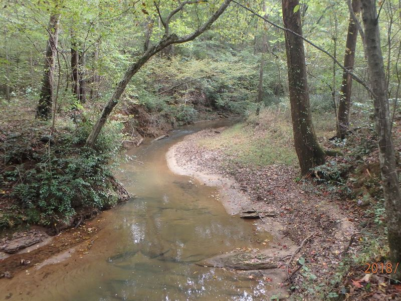 Beautiful Creek And Large Hardwoods : Gainesville : Hall County : Georgia