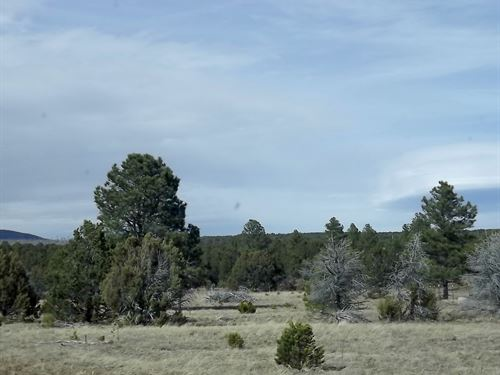 Central NM 31 Acres Remote Secluded : Tijeras : Bernalillo County : New Mexico