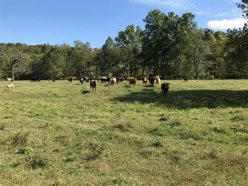 515-Acre Ozarks Cattle Farm : Willow Springs : Texas County : Missouri