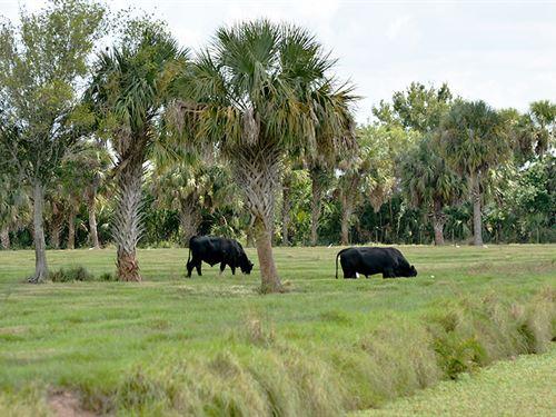 Saint Lucie Fairgrounds : Fort Pierce : Saint Lucie County : Florida