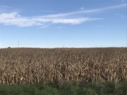 Cropland & Pasture : Ayrshire : Palo Alto County : Iowa