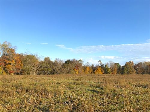 Patton Mills Rd, 56 Acres : Stockport : Washington County : Ohio