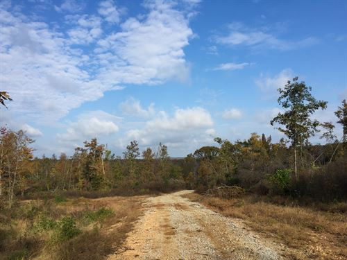 Tract 1599 : Mount Gilead : Henderson County : Tennessee