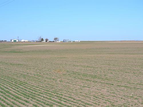 Schuessler Dryland--Cheyenne County : Potter : Cheyenne County : Nebraska