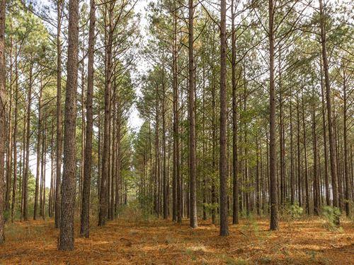 Beautiful Timberland Tract : Chester : Dodge County : Georgia