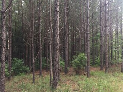 434 Acre Timber Investment Property : Wesson : Copiah County : Mississippi