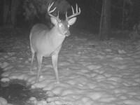 Hunting, Hardwoods, Homestead Land : Talladega : Alabama