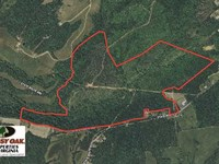 215 Acres of Hunting Land For Sale : Gladstone : Appomattox County : Virginia
