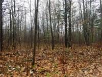 Beautiful Wooded Acreage : Lac Du Flambeau : Vilas County : Wisconsin