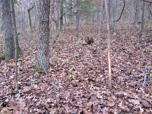 Wooded Commercial/Residential : Waynesville : Pulaski County : Missouri
