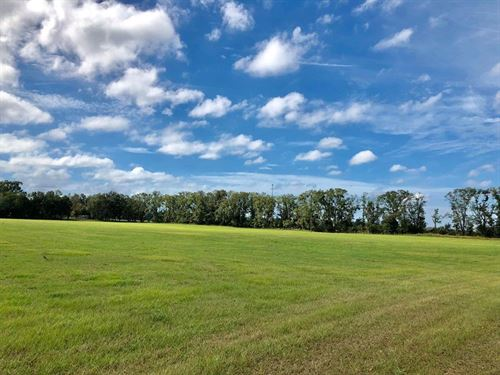 Pasture/Farmland Chiefland : Chiefland : Levy County : Florida