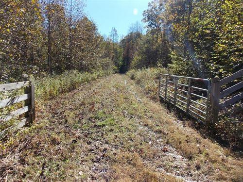 Wooded Land Sale Buffalo Mountain : Willis : Floyd County : Virginia