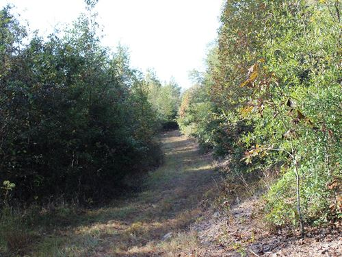Hunting Tract With Good Timber : Gibson : Glascock County : Georgia