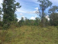 Great Small Tract For Hunting : Jasper : Hamilton County : Florida