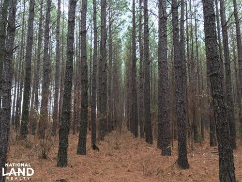 Small Hunting Property With Timber : Washington : Wilkes County : Georgia