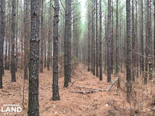 Small Acreage Hunting Tract With Ti : Washington : Wilkes County : Georgia