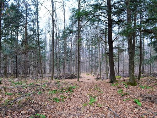 Building And Hunting Wooded Acreage : Wausau : Marathon County : Wisconsin