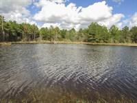 166 Ac Dickey Loop : Bedias : Grimes County : Texas