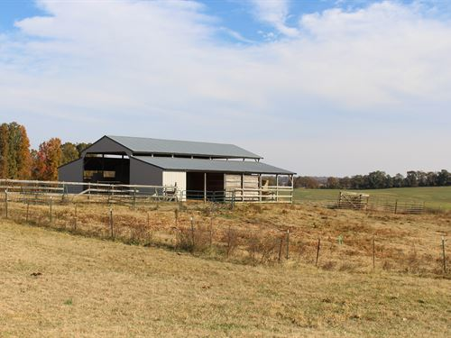 Cattle Ranch Beautiful Views : Pocahontas : Randolph County : Arkansas