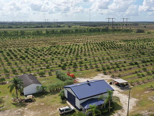 Orange Avenue 70 Acre Farm : Fort Pierce : Saint Lucie County : Florida