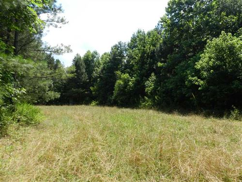 Large Hunting Property Near Brilli : Brilliant : Marion County : Alabama