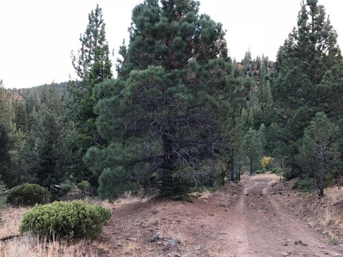 138 Acres Trees Modoc County : Alturas : Modoc County : California