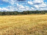 Price Reduced Ward Road Farm : Watkinsville : Greene County : Georgia