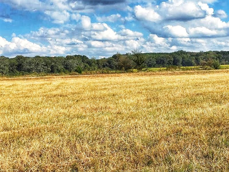 Price Reduced Ward Road Farm : Ranch for Sale : Watkinsville : Greene  County : Georgia