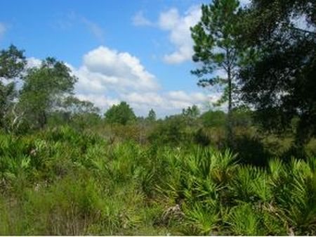 80 Acres (a-303) : Mayo : Lafayette County : Florida