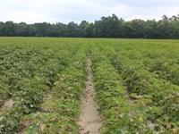 Absolute, 5 Farms In Suffolk Va : Suffolk : Suffolk City County : Virginia