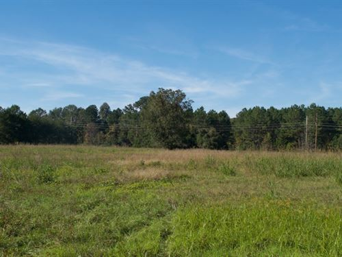 Timberland, Hunting, Development : Cheraw : Chesterfield County : South Carolina