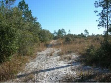 27.3 Acres (a-311) : Cedar Key : Levy County : Florida