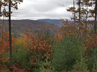 Pine Hill Forest : Lisbon : Grafton County : New Hampshire