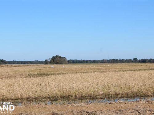 Southwest La, 556 Rice And Crawfish : Oberlin : Allen Parish : Louisiana