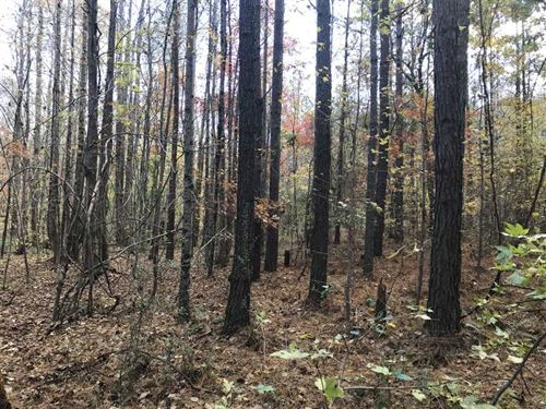 40 Acres in Clay Co, AL on Waits : Lineville : Clay County : Alabama