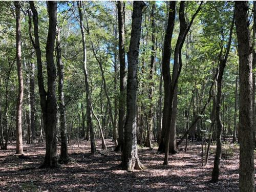 260 Acres In Sharkey County In Roll : Rolling Fork : Sharkey County : Mississippi