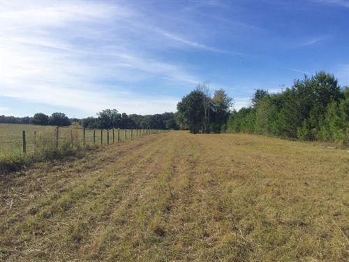 38.50 Acres Open Land : Welborn : Suwannee County : Florida