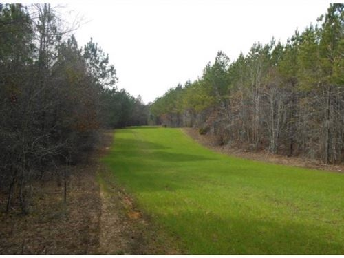 300 Acres In Montgomery County : Kilmichael : Montgomery County : Mississippi