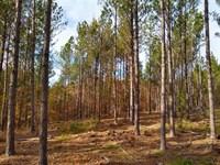 Mountainous Views, Timber & Hunting : Ridgeway : Fairfield County : South Carolina