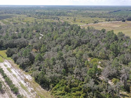 Sw Hardee County Hunting 80 Acres : Ona : Hardee County : Florida