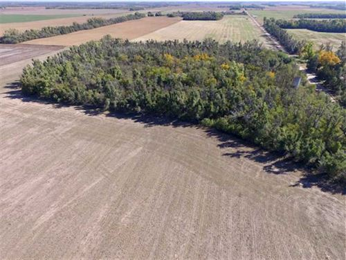 Auction.160 Acres of Hunting : Saint John : Stafford County : Kansas