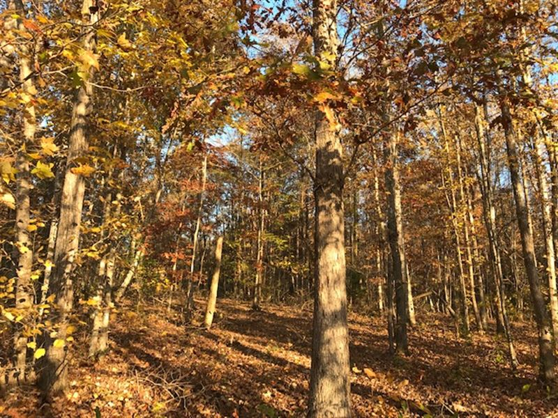 82 Acre Hunting Investment Land : Odenville : Jefferson County : Alabama