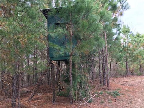 Hunting Tract Near Birmingham Al : Oneonta : Blount County : Alabama