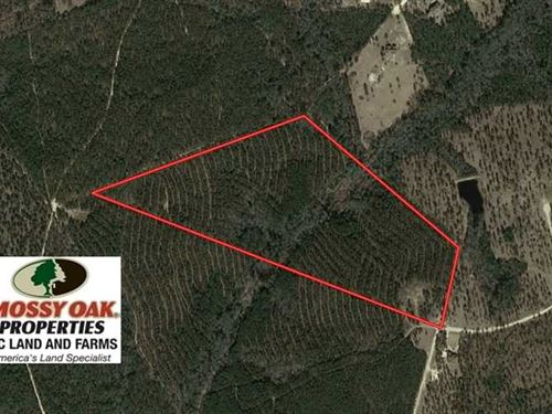 Reduced, 44.56 Acres of Residenti : Jackson Springs : Moore County : North Carolina