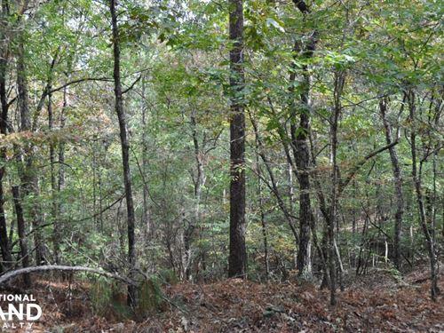 Lake Mitchell Waterfront Acreage : Weogufka : Coosa County : Alabama