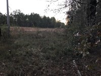 Prime Hunting Land In Dodge Co : Rhine : Dodge County : Georgia
