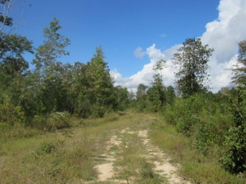 43.9 Acres, Great Hunting : Summit : Pike County : Mississippi